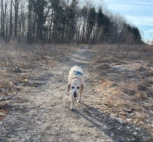 Buddy on the Trail